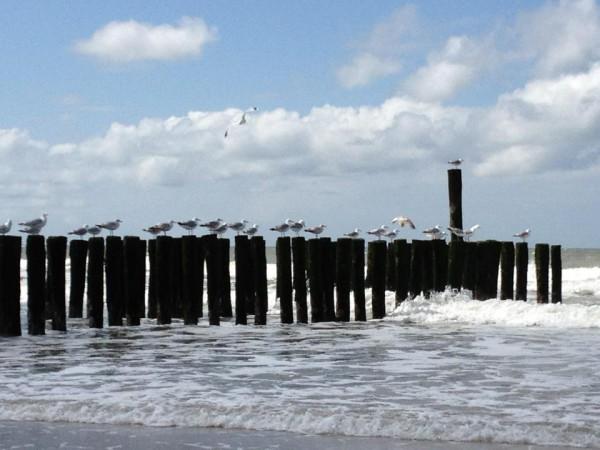 Sonne, Sommer, Strand und agile im Business Urlaubs Coaching